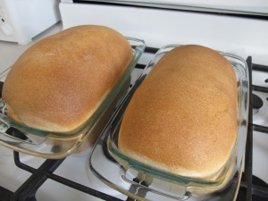 Honey Wheat Bread (15)
